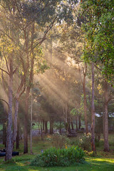 Rays In The Country || TELGRAPH RETREAT || PORT MACQUARIE (rhyspope) Tags: australia aussie nsw new south wales port macquarie telegraph retreat farm rural rays morning nature light rhys pope rhyspope canon 5d mkii green field