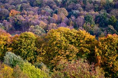 Trees (rustyruth1959) Tags: shades colours nature outdoor gold brown green leaves autumncolours fall autumn trees woodland ripponden yorkshire tamron16300mm nikond3200 nikon foliage plant purple tones
