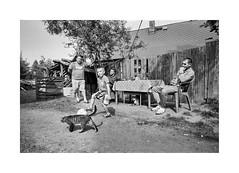In the garden (Jan Dobrovsky) Tags: 400 analog bw biogon21mm boys contrast document film grain gypsies ilfordhp5 kids krásnálipa leicam6 northernbohemia outdoor roma countryside countrylife