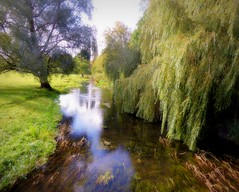 River Stour (Conundrum37) Tags: river stour kent willows godmersham