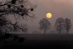 DSC02394 (Adrian Ruczyński) Tags: 2016 6000 color dark ilce6000 nex outdoor poland sel55210 sony sky sonyflickraward sonyflickrawardgold sunrise tree travel