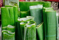 1911-1229 (phuong.sg@gmail.com) Tags: abstract asia backdrop background banana beautiful beauty botanical bright cell closeup color concept design detail element environment foliage fresh freshness green grow growth leaf life lines macro market natural nature organic papyrus plant sale season selling simple space spring summer texture tropical