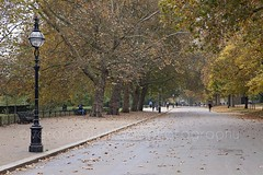 Hyde Park, London (veronicajwilliams photography) Tags: veronicajwilliamsphotography veronicajwilliams travelphotography travel uk london canon canon5dmarkii canon2470mm 2470mm canon2470mmf28l hydepark park trees nature
