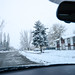 161128-tree-neighborhood-driving-commute.jpg