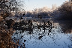 Frost waterscape [in explore 04/01/17] (jacques_teller) Tags: salamanca castillayleón spain tormes river water symmetry landscape trees nikond7200 jacquesteller depthoffield frost waterscape vegetation nature reflection