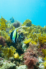20150802-DSC_4003.jpg (d3_plus) Tags: sea sky fish beach japan scenery underwater diving snorkeling  shizuoka    apnea izu j4  waterproofcase    skindiving minamiizu       nikon1 hirizo  1030mm  nakagi 1  nikon1j4 1nikkorvr1030mmf3556pdzoom beachhirizo misakafishingport  1030mmpd nikonwpn3 wpn3