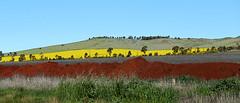 Nature's Kaleidoscope (PhotosbyDi) Tags: landscape dookie hff nikond600 fencefriday nikonf282470mmlens