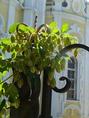 (GrusiaKot) Tags: church ukraine chiesa kharkov kharkiv  ucraina   luppolo