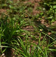 QuillaBee (Roxchy) Tags: green garden jardin bee abeja barranquilla miralcentro