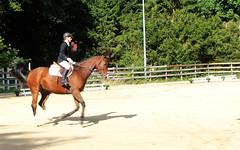 Doorn (Steenvoorde Leen - 2.1 ml views) Tags: horses horse jumping cross doorn pferde pferd reiten manege paard paarden springen 2015 utrechtseheuvelrug sgw dressuur arreche manegedentoom