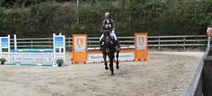 Doorn (Steenvoorde Leen - 1.8 ml views) Tags: horses horse jumping cross doorn pferde pferd reiten manege paard paarden springen 2015 utrechtseheuvelrug sgw arreche manegedentoom