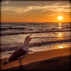sunrise? let's cry (LB-fotos) Tags: ocean sea sun beach strand sunrise germany landscape deutschland coast seagull gull 28mm balticsea baltic mwe landschaft sonne sonnenaufgang ostsee kste timmendorfer