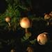 Pilze - fungi