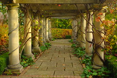 Autumn Pergola (Dave Roberts3) Tags: park autumn fall grass wales architecture path newport hedge ornamental bellevue gwent pergola citrit coth5