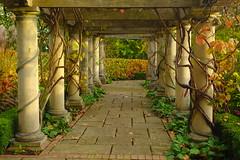 Autumn Pergola (Dave Roberts3) Tags: park autumn fall grass wales architecture path newport hedge ornamental bellevue gwent pergola citrit coth5