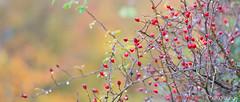 Hatfield_Forest-57 (Eldorino) Tags: park uk morning autumn trees nature forest sunrise landscape countryside nikon britain centre jour hatfield bishops stortford essex hertfordshire stanstead hatfieldforest