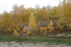 RU2036  (S.K. LO) Tags: russia easternsiberia irkutskregion