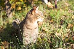 IMG_1535 (fotografia per passione) Tags: cats felini gatti pus