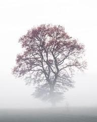 Lonely tree in the mist    IMG_2280 (Role Bigler) Tags: autumn mist tree nature schweiz switzerland nebel suisse herbst natur baum solothurn lonelytree einsamerbaum wasseramt
