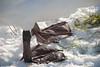 best of mp en ingena (254 van 377) (ingenavandijk) Tags: spijkenisse januari2010