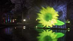 Winterlichter Palmengarten 2016 (Rene Stannarius) Tags: reflections am nightshot frankfurt main palmengarten garten lichter blaue thebluehour botanischer spiegelungen stunde winterlichter