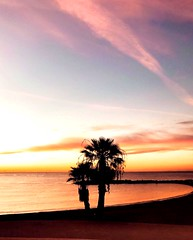 Puerto Banus Marbella, Spain (justinarcy) Tags: amazingview sunsetphotography photography picturesque reflections silhouette glow colors palmtrees sand beach water sea ocean puertobanus sky sunsets sunset spain