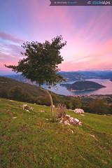 The Tree over Iseo lake (MicheleRossettiClickalps) Tags: iseolake lakes italianlakes landscape sunrise sunrisephotograpy nikon clickalps cloud clouds traveldestination landmark