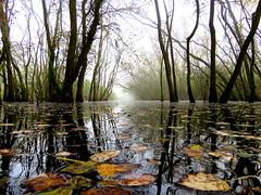 IMG_0014x (gzammarchi) Tags: italia paesaggio natura ravenna marinaromea puntealberete bosco lago stagno riflesso foglia