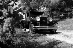 Studebaker Commander 1928 (FlyingFocus) Tags: studebaker commander bj1928 schwarzweis schwarz weis autoscheinwerfer auto hochzeit wein weinberg vintage wald
