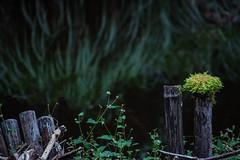 i (l e o j) Tags: canon eos kiss x2 rebel xsi 450d japan miyazaki kushima akaike valley ravine gorge campground      plant moss post pond growth flora