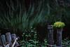 i (l e o j) Tags: canon eos kiss x2 rebel xsi 450d japan miyazaki kushima akaike valley ravine gorge campground 宮崎 串間 赤池 赤池渓谷 赤池キャンプ場 plant moss post pond growth flora 植物 苔 コケ 池