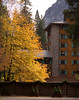Ahwahnee Hotel and Bigleaf Maple (Jeffrey Sullivan) Tags: ahwahnee hotel fall bigleaf maple yosemite national park yellow fallcolors november yosemitevalley yosemitenationalpark landscape travel photography 2005