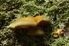 Ilston fungi