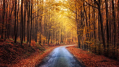 Autumn Journey XIV. (Zsolt Zsigmond) Tags: woods forest trees road light leaves foliage autumn fall landscape landschaft colour bright walk picture day exposure nikkor colours flickr nature orange tree yellow