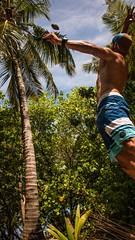 coconut hunting (yepabroad) Tags: maldives malé surf bodyboard atoll baa raa swiss oomidoo drone