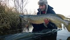 15284164_1224015837636347_1706371931189523421_n (gsf fishing) Tags: pike gedde geddefiskeri pikefishing