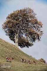 L'albero più famoso del mondo :D