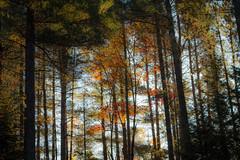 IMG_6251 (JMitchellPhotography) Tags: adirondack mountains fall