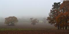 """Into the Mist"" (AndyorDij) Tags: lyndon lyndonhill lyndonhall lyndonestate england rutland uk unitedkingdom 2016 autumn trees tree oak fields"