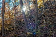 Hilton Area (11-10-16)-038 (nickatkins) Tags: fall fallcolors fallcolor fallfoliage autumn water sun sunlight stream