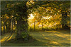 An Autumn Morning (Audrey A Jackson) Tags: canon60d lakedistrict cumbria autumn colour nature sunshine shadows ivy garden 1001nightsmagiccity