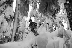 Tree Skiing (Jason Hummel Photography) Tags: whitepassskiarea skiresort skiarea washingtonstate winter2016 powder snow snowfall southerncascades cascademountains mountains jas2359 joshhummel jumping jump ski skiing blackandwhite monochrome treeskiing