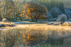 Goodbye Autumn - River Brathay, Lake District, UK. (_Danoz) Tags: autumn tree oak great lake district cumbria river brathay elterwater morning sunrise reflections water autumnal season winter frost cold fresh mist valley beautiful tranquil serene calm serenity tranquility stunning dreamy dreamscape landscape photography england britain uk scenic view scenery foliage leaves orange vibrant glowing ethereal light sunlight backlit