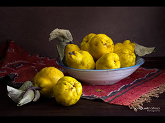 BODEGN CON MEMBRILLOS MADUROS (Miguel Calleja) Tags: bodegn stilllife naturemorte naturamorta membrillo coing quince