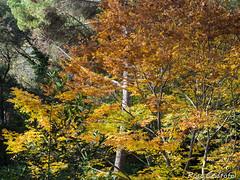 Tardor (Foleta) Tags: barcelona horta parc tardor autumn reflexes