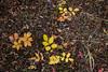 Forest (PhotoBobil) Tags: grandlake colorado forest