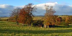 Autumn Barn (AndyorDij) Tags: allexton landscape leicestershire rutland autumn andrewdejardin england uk unitedkingdom 2016 trees tree barn fields grass