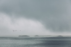 Lofoten into the clouds (dataichi) Tags: ocean travel mist bird tourism nature norway fog clouds landscape island grey islands wildlife dew destination scandinavia lofoten birdwatching nordland