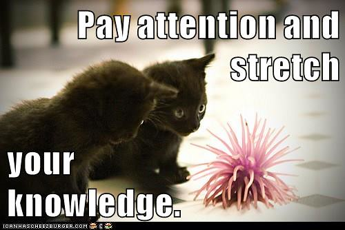 Pay attention and stretch your knowledge