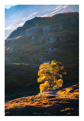 Tree (Sebastian Kraus) Tags: trees light sunset red sun green water grass rain yellow clouds sunrise scotland highlands rocks edinburgh view sebastian stones visit workshop loch kraus lochan visitscotland takeaview sebastianito